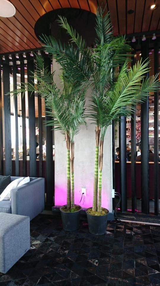Palms coconut 8 feet